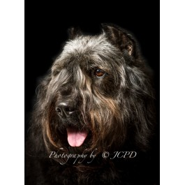 Bouvier Dog Greeting Card