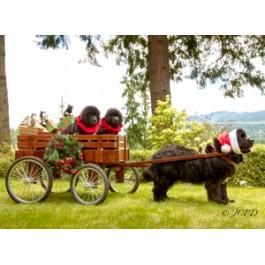 Christmas Newfoundland Dog Puppy Greeting Cards