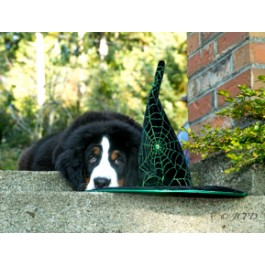 Bernese Mountain Dog Puppy Greeting Card