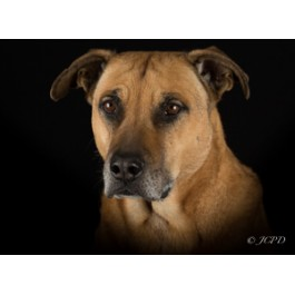 Mixed Dog Breed Greeting Cards
