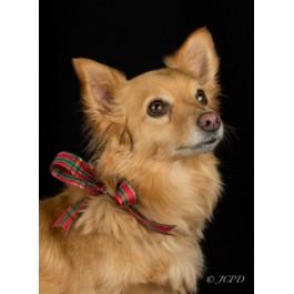 Mixed Breed Dog Greeting Cards