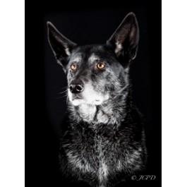 McNab Dog Greeting Card