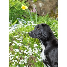 Mix Breed Dog Greeting Card