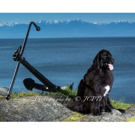 Newfoundland Dog Calendar 2015