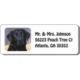 Black Labrador Address Labels