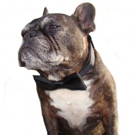 Dog Bowtie Collar Black