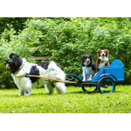 Landseer Newfoundland with Border Collies Dog Greeting Cards