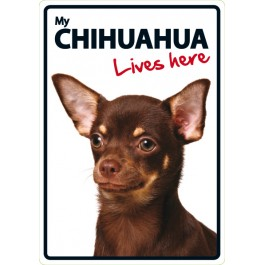 Chihuahua Lives Here A5 Plastic Sign