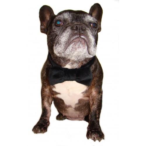 Velvet Dog Bow Tie Collar Cover Black