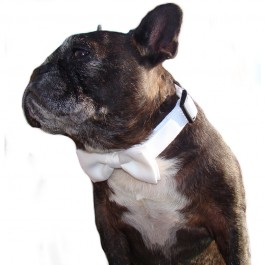 Bowtie Collar White