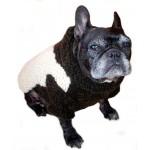 Designer Dog Sweater by Ilse Leader