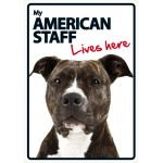 American Staff Lives Here A5 Plastic Sign