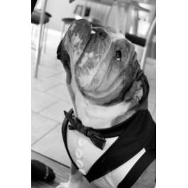 Dog Tuxedo with Tails