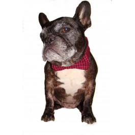Bushman Plaid Dog Bow Tie Collar Cover
