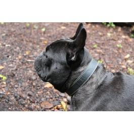 Stylish leather Dog Collar
